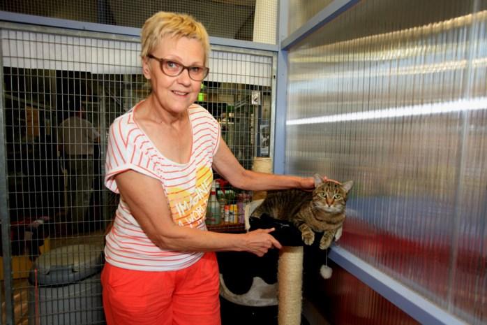 Dierenartsen boos om nieuwe kattenwet