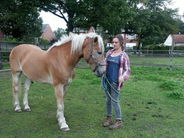 Paarden vergiftigd met twee kilo rattenvergif