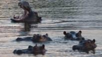 Twaalf scholieren gedood bij nijlpaard-aanval