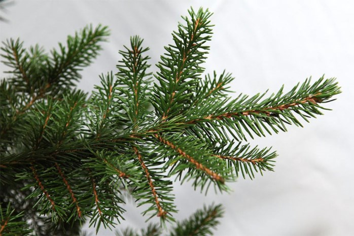 Afwijking op rustdag tijdens kerstperiode