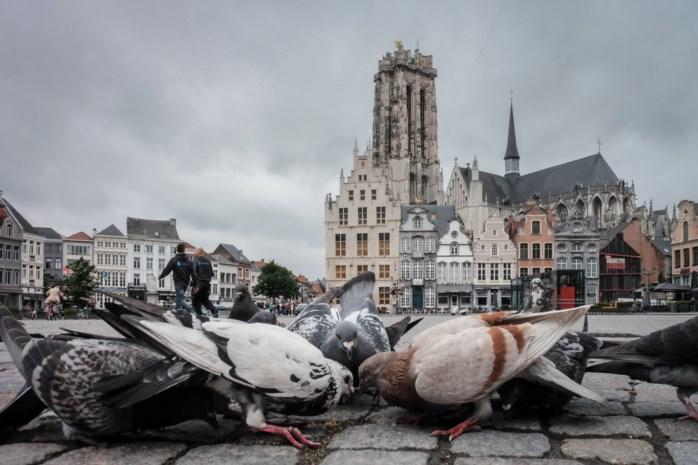 Stad voert strijd tegen 20 ton duivendrek