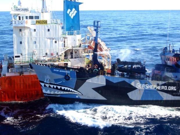 Belgische militant opgepakt bij protesten tegen walvisvangst