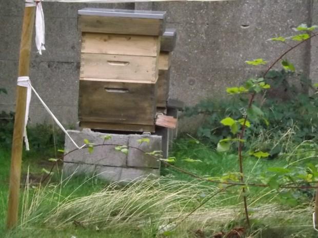 De bijen van deFENIKS