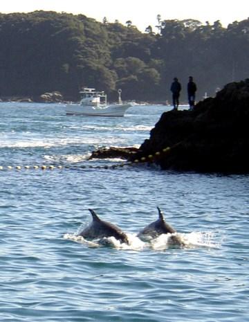 Eerste dolfijnen gedood tijdens jaarlijkse jacht