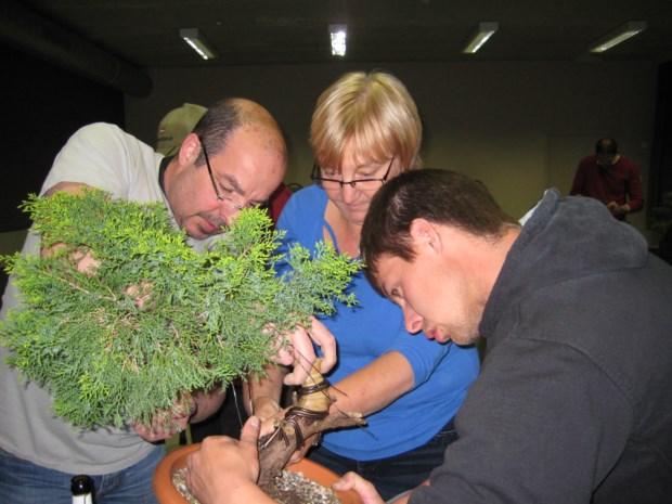 Jubilerende vereniging Ikeda plant kasteel vol met bonsaiboompjes