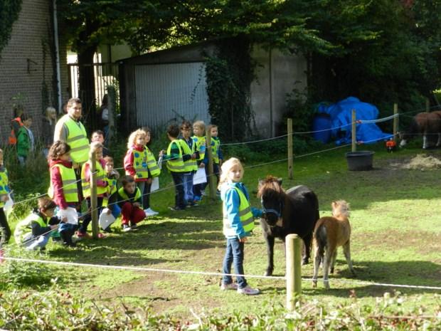 Minipaardjes kijken in Berendrecht