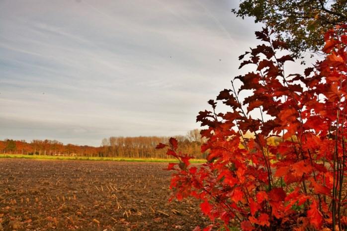 Zacht herfstweer voor vandaag en morgen