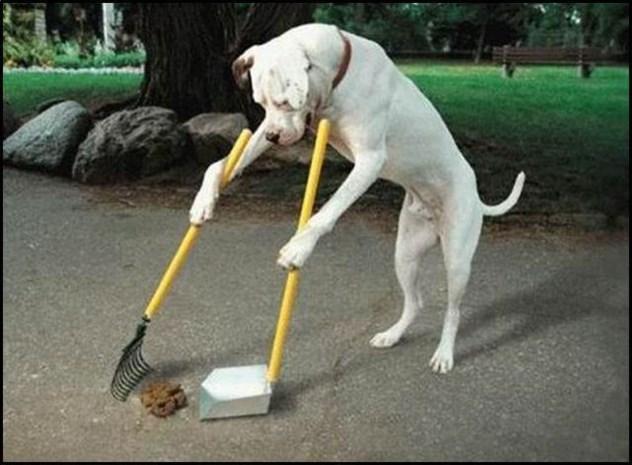 Neem hondenpoepzakje mee en vermijd boete