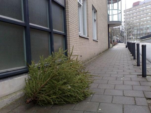 Gemeente haalt kerstbomen op