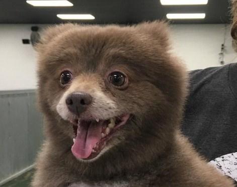Internet in de ban van mysterie: is dit een hond of een beer?