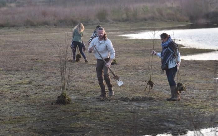 Natuurpunt verwijdert 800 illegaal aangeplante bomen naast Merodebossen