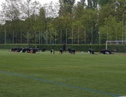 Vijftien Rode Duivels op training in Zwitserland, Nainggolan apart