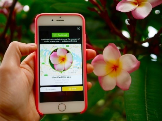 Nieuwe app is 'Shazam voor plantjes'