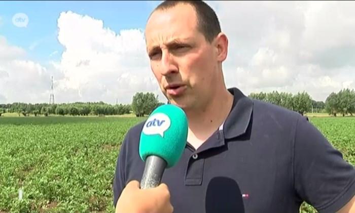 Ekerse boer ziet het somber in voor de aardappeloogst