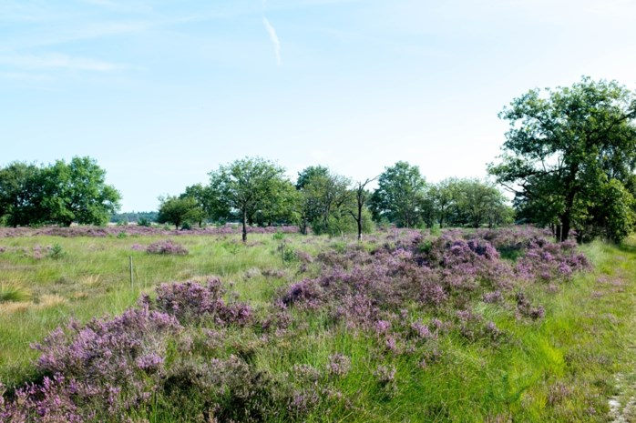 Kalmthoutse Heide stap dichter bij label 'stiltegebied'