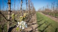 Belgische landbouw krijgt 11 miljoen van EU