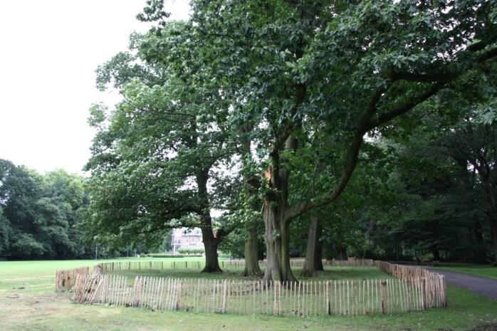 Bomen worden klimtoestellen voor de hertenweide