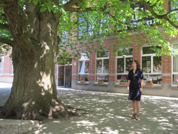 Afbraak school Halle-Velden gaat van start