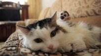 Zoveel miljoenen euro's spenderen Belgen jaarlijks in totaal aan huisdieren