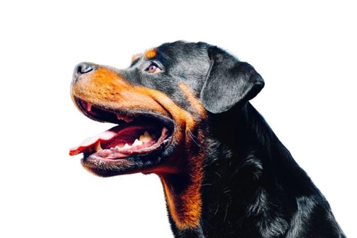 Moeder en kind aangevallen door Rottweiler