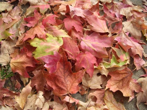 De bladeilanden zijn op komst