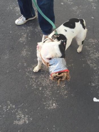 Baasje plakt muil hond dicht met tape