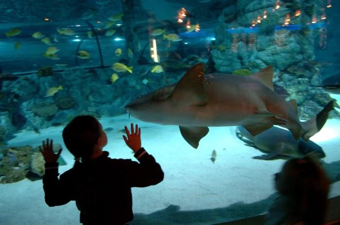 Aquatopia gaat dicht in januari