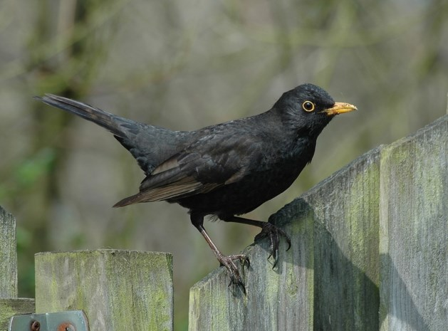 Grote Vogelweekend van Natuurpunt komt eraan