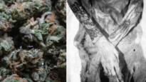Wordt mysterie van mummies vol tattoos die begraven werden met paarden en een hele hoop cannabis eindelijk opgehelderd?