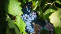 Niet de Fransen, maar de Spanjaarden zijn de grootste wijnbouwers van Europa