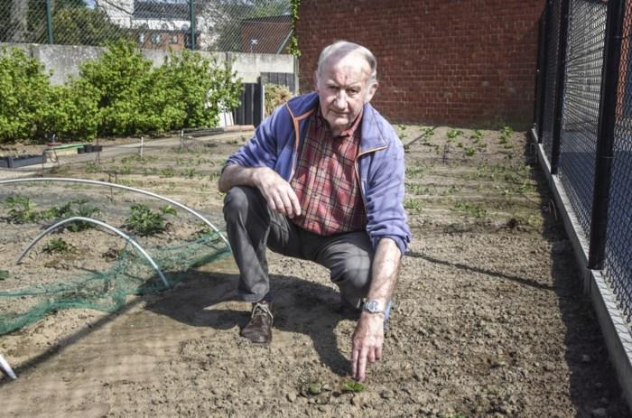 Eigenaar moestuin wanhopig door gifstrooier die zijn planten vernielt