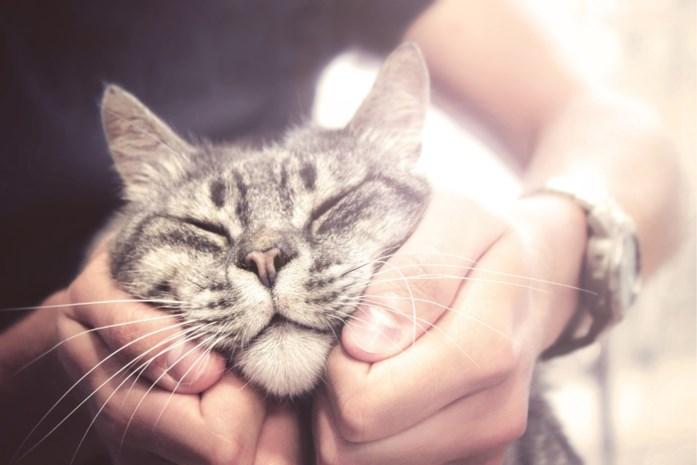 Wetenschappelijk bewezen: katten houden echt van mensen