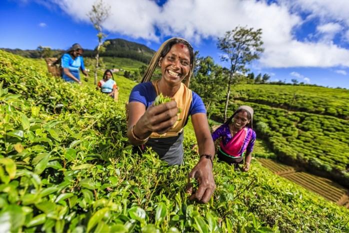 Sri Lanka: Groene parel in Indische Oceaan