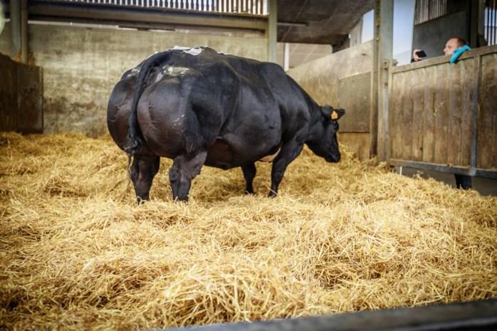 """""""Verminderde vleesconsumptie oorzaak dalende rentabiliteit veebedrijven"""""""