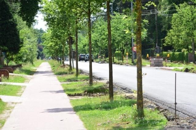 Nieuwe bomen langs de weg mogen niet dikker meer zijn dan 10 cm en daar is een goede reden voor