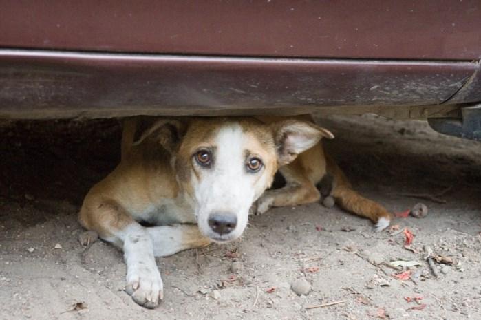 Dierenliefhebbers in Spanje krijgen boete tot wel 5.000 euro voor elk dier dat ze van de straat redden