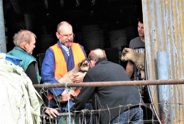 """Eigenaar krijgt in beslag genomen schapen niet terug: """"Als ik ze niet terug krijg, doe ik hen een proces aan"""""""