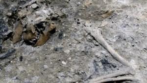 Mini-Pompeii met resten van hond met puppy's aangetroffen bij graafwerken voor metrotunnel in Rome