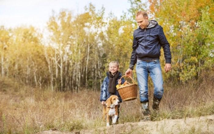Mooi herfstweer: tien routes voor de ultieme herfstwandeling