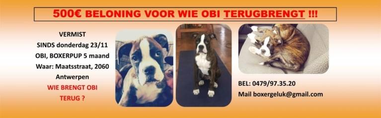 Eigenaars loven 500 euro uit aan vinder van hun vermiste hond