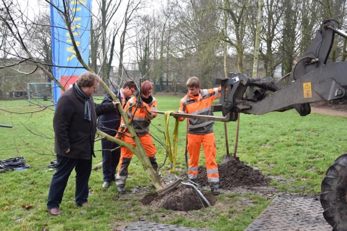 District rondt de kaap van 500 extra aangeplante bomen