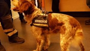 Dit is Bodi, die samen met andere honden mensenlevens redde na explosie in Antwerpen