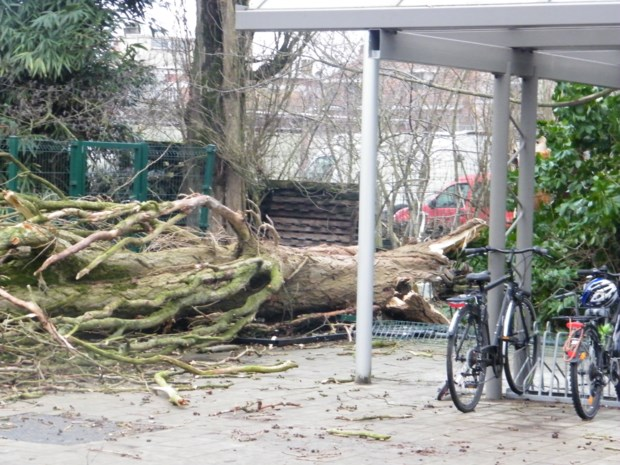 Populier valt vlak naast fietsenrek in school Immaculata