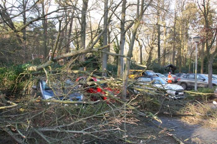 Omgewaaide boom zorgt voor ravage op parking Dienstencentrum