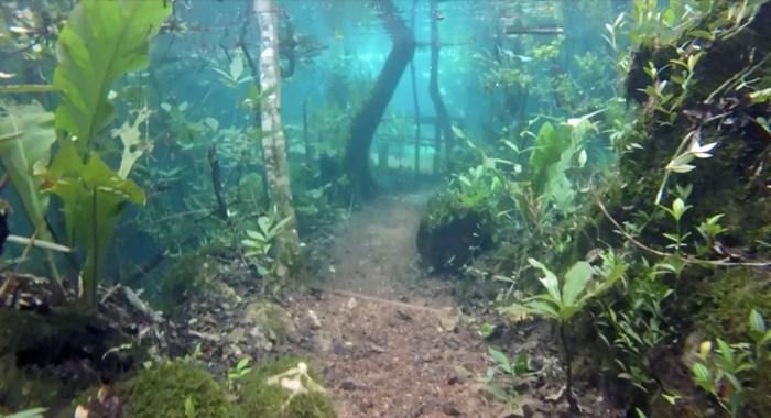 Hevige stortbui tovert natuurpark om tot mystieke onderwaterwereld