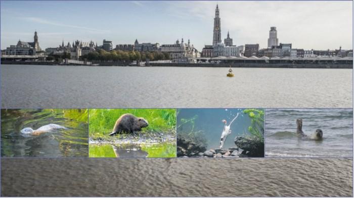 OVERZICHT. De tweede zoo van Antwerpen: deze dieren (her)leven in de Schelde