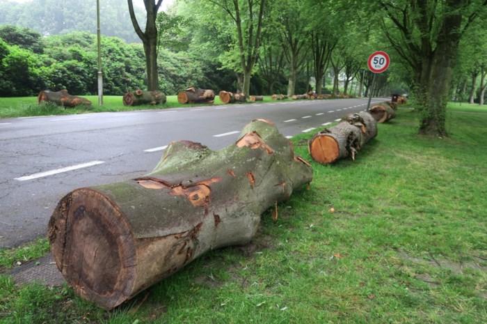 """Liggende boomstammen in villawijk: """"Onze mooie wijk wordt verminkt"""""""