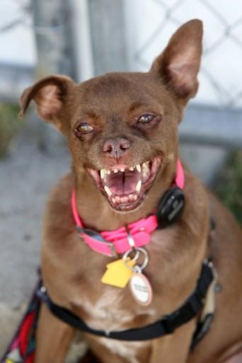 Dit is de lelijkste hond ter wereld