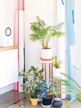 Je kan nooit te veel planten hebben: met deze tips blijven ze het hele jaar mooi