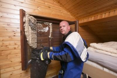 """Man uit Lint richt eigen firma op om wespen te verdelgen: """"Brandweer wordt overstelpt"""""""